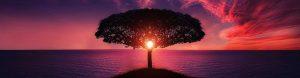 Mindfulness - Mind Remedies South Croydon